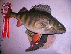 Первичная обработка рыб для изготовления трофея
