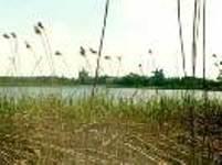 Природа в окрестностях здравницы Ахманка