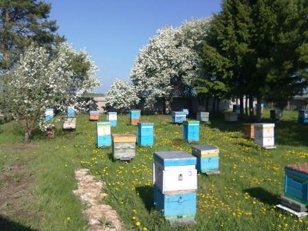 Купить мед в Тюмени с пасеки Аромашево
